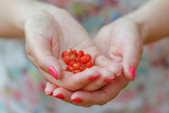Woman  with a hand full of wild strawberries Royalty Free Stock Images