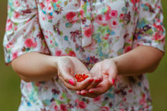 Woman  with a hand full of wild strawberries Royalty Free Stock Image
