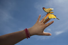 Woman hand gently holding yellow butterfly Stock Photo