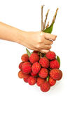 Woman hand give  a bunch of  Lychee fruits Stock Images