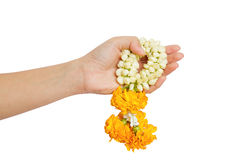 Woman hand give a thai jasmine garland. On white background,Abstract meaning congratulatory and felicitous Royalty Free Stock Photos