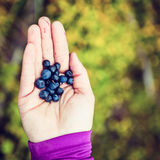 Woman hand giving blueberry vintage background stock images
