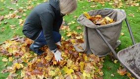 Woman hand glove load tree leaf bag. autumn works. Woman hand glove load colorful tree leaf in bag. autumn works in garden stock video footage
