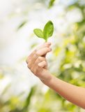 Woman hand with green sprout Stock Photography