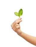 Woman hand with green sprout Royalty Free Stock Photography