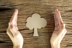 Woman hand hold brown paper tree. Shape on wooden background Royalty Free Stock Photo