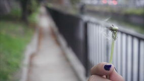 Woman hand hold dandelion flower blowing wind stock footage