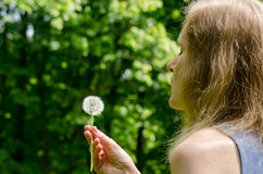 Woman hand hold  deflorated dandelion flower seeds Stock Photo