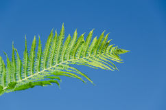 Woman hand hold fern plant leaf on blue sky Royalty Free Stock Photo