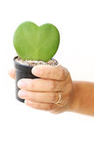 Woman hand hold green leaf and red heart shape in flower pot Stock Photo
