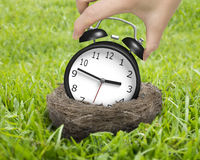 Woman hand holding alarm clock in nest Royalty Free Stock Photography