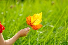 Woman hand holding autumn leaf Stock Image