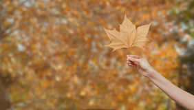 Woman hand holding an autumn leaf Stock Photo