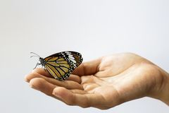Woman hand holding a beautiful butterfly . Royalty Free Stock Image