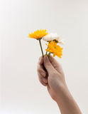 Woman hand holding a bunch of flowers Stock Photo
