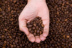 Woman hand holding coffee beans Stock Images