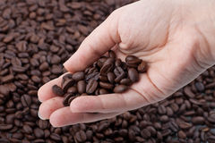Woman hand holding coffee grains. Over blured coffee grains background Royalty Free Stock Images
