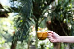 Woman Hand holding a cup of coffee on a tropical palm leaves background stock photography