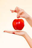 Woman hand holding delicious red apple Stock Image