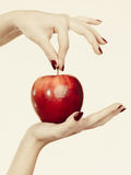 Woman hand holding delicious red apple Stock Photo