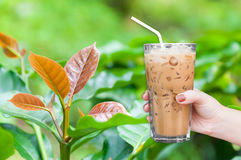 Woman hand holding the glass iced coffee on coffee tree young leaf. Leaves of arabica coffee tree nursery plantation,Iced latte coffee Stock Images