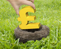 Woman hand holding golden pound sterling symbol in nest. On the meadow stock photography