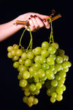 Woman hand holding grapes Royalty Free Stock Photography