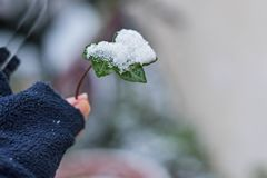 Woman hand holding green leaf covered whit snow, closeup and macro photography. Closeup and macro photography/ green leaf covered whit snow in her hand/ winter Royalty Free Stock Photography