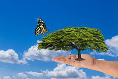 Woman hand holding green tree with butterfly on blue sky Stock Images
