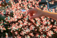 Woman hand holding the LED clear flower for decoration. Christmas and New Year concept stock photography