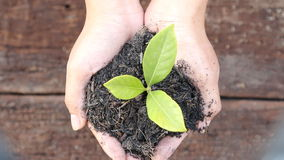 Woman hand holding a little green tree plant Stock Photos