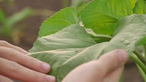 Woman hand holding a little green tree plant,top view. Woman hand holding a little green tree plant stock video footage