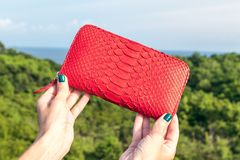 Woman hand holding luxury snakeskin python wallet on a tropical green background. Bali island Royalty Free Stock Photo