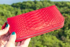 Woman hand holding luxury snakeskin python wallet on a tropical green background. Bali island Stock Image