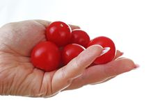 Woman hand holding mini tomatoes on isolated white cutout background. Studio photo with studio lighting easy to use for every conc. Ept royalty free stock photo
