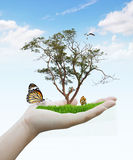 Woman hand holding nature Stock Photography