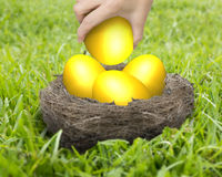 Woman hand holding one of golden eggs in nest Royalty Free Stock Image