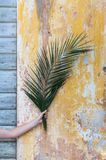 Woman hand holding a palm branch in front of an antique wooden d Royalty Free Stock Photos