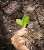 Woman hand holding plant in soil Royalty Free Stock Photos