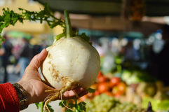 Woman hand holding swede or turnip at street farmers market Stock Photos