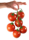 Woman hand holding tomato Royalty Free Stock Photos