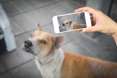 Woman hand holding and using mobile,cell phone,smart phone photography and a stray dog. stock images