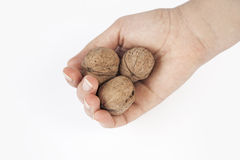 Woman hand holding walnuts Stock Photography