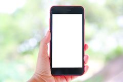Woman Hand Holding The White Smartphone With Blank Screen. In The Park Stock Images
