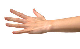 Woman hand. Isolated on white background Stock Images