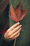 Woman hand with leaf on tree royalty free stock photos