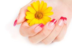 Woman hand with pink manicure Stock Photography