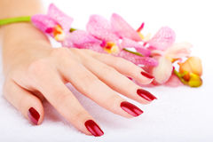 Woman hand with pink orchid Stock Photos