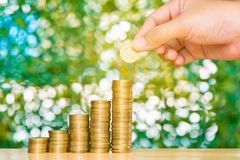 Woman hand put coin on step of coins stacks and gold coin money. In the glass jar on table in garden with green background, for saving for the future banking Royalty Free Stock Images