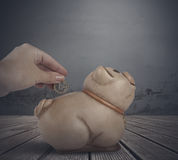 Woman hand putting coin into a piggy bank Stock Photos